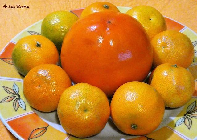 P1490127  Farandole en orange