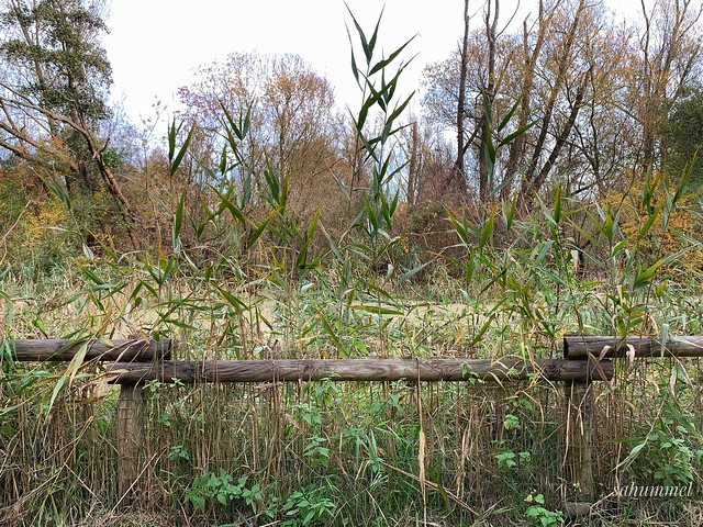 Unterwegs in Rudow im Herbst