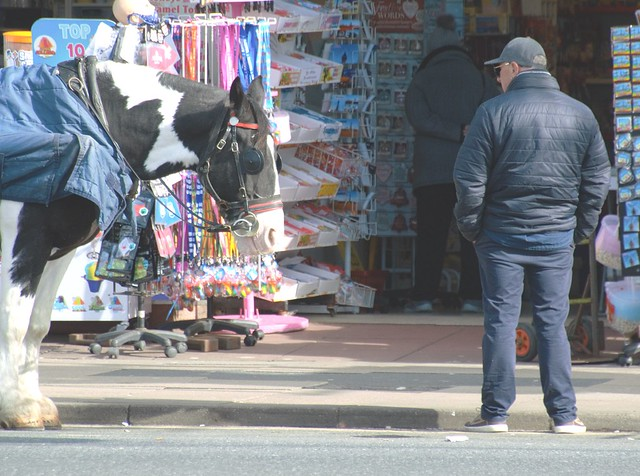 Man stares at horse in Blackpool