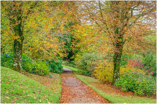 Autumn Colour In The Garden - Lanhydrock, Cornwall.