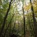 Stadwald im Herbstregen-bw_20201028_0451.jpg
