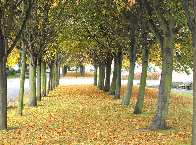 Autumn at Port Sunlight