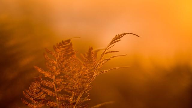 Fern & sunset