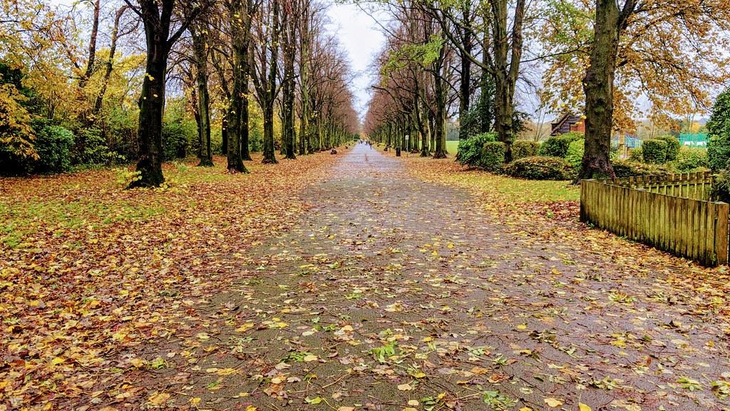 Down the Autumn path at Haslam Park