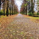 Down the Autumn path at Haslam Park