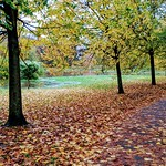 Autumn colour in Haslam Park, Preston