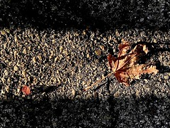 Leaves in Liminal Space by chicago9mlp