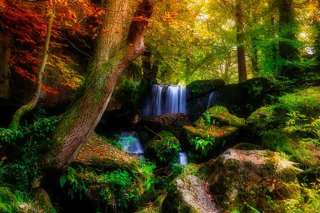 Woodland in Autumn - In Explore