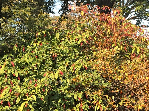 Fall Foliage in Riverside Park
