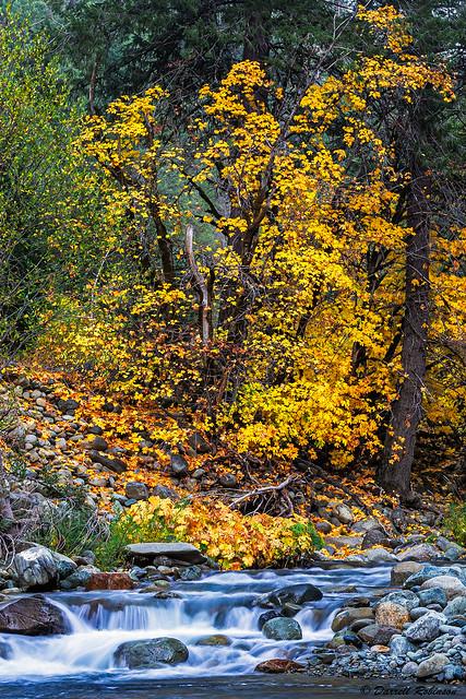 Northern Sierra Autumn