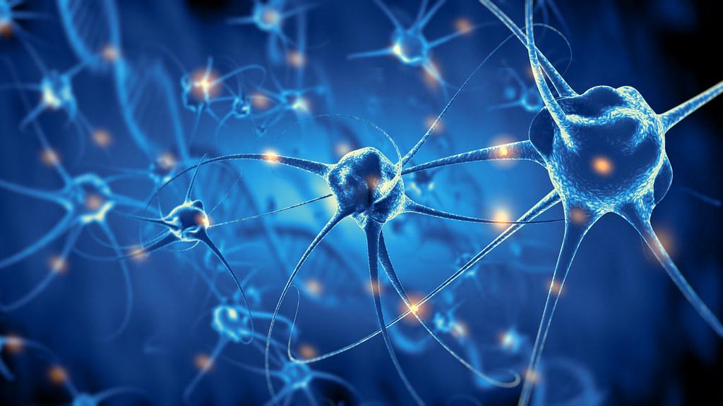 A diagram of active nerve cells