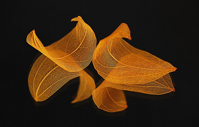 Orange Skeleton Leaves