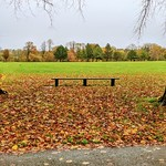 Haslam Park Autumn bench scene