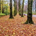 Haslam Park Autumn scene