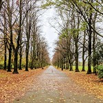 Haslam Park Autumn walkway scene