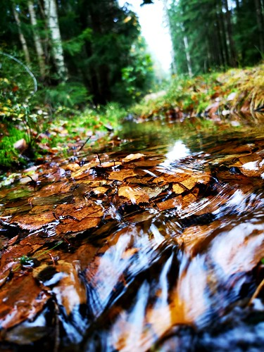 Fall leafs submerged. | by andreas.lindlof