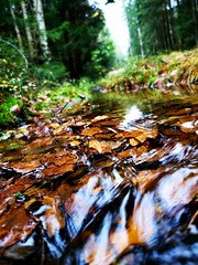 Fall leafs submerged.