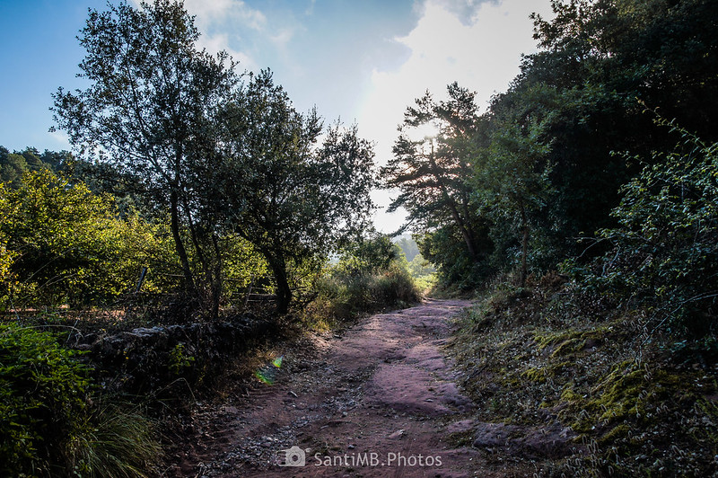 Camí Vell de l'Abellera