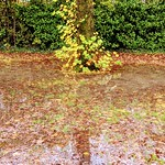 Haslam Park Autumn puddle scene