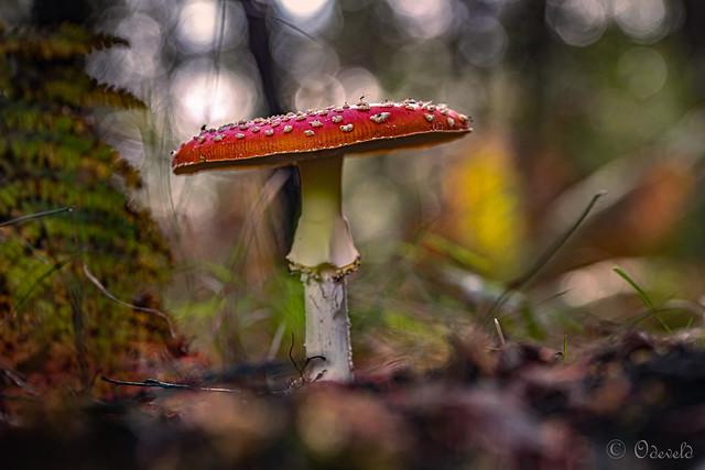 Autumn impression I _MG_1508