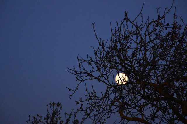 La lluna a l'ametller
