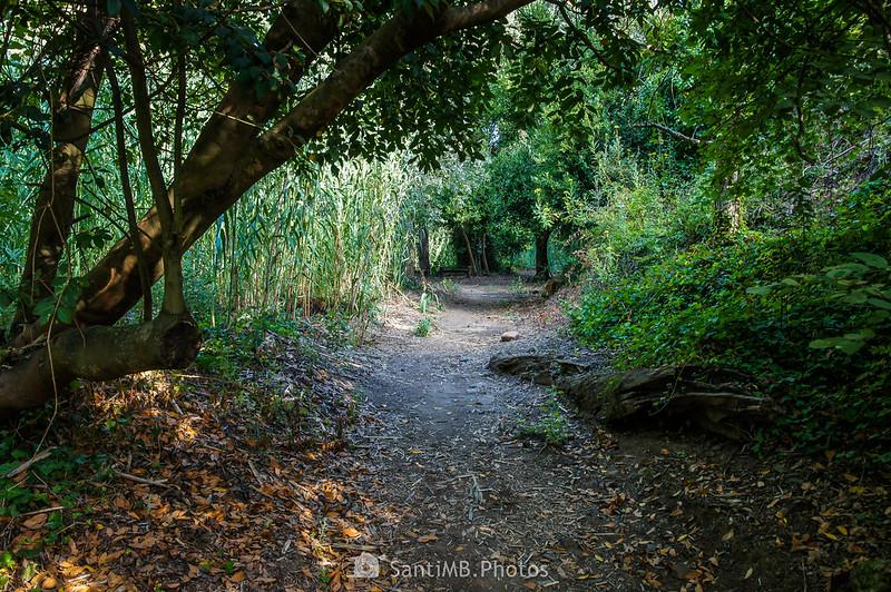 El Camí del Rec por el bosque de ribera