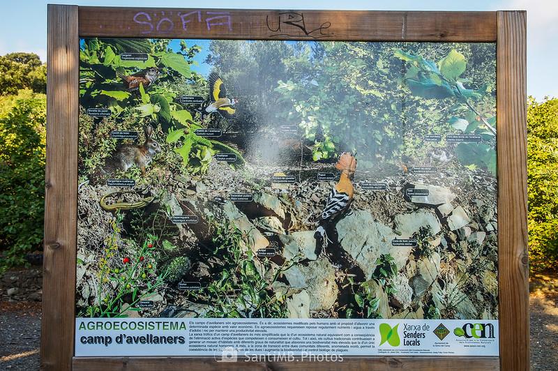 Panel informativo de fauna y flora del avellanar en el Camí del Rec