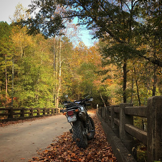 Yamaha TDUB Club - Tour De' Talladega National Forest Oct 23, 2020 | by GCRad1