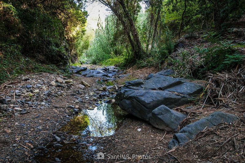 Riera de La Selva
