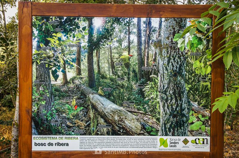 Camí del Rec por el bosque de ribera