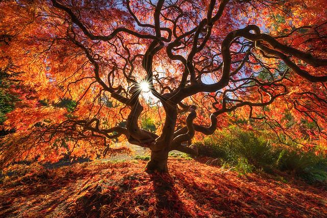 Glorious tree