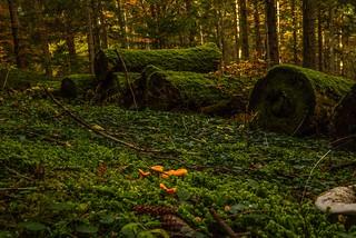 Wenn die Welt der Moose und Pilze wieder das Kommando übernimmt - When the world of mosses and mushrooms takes over again