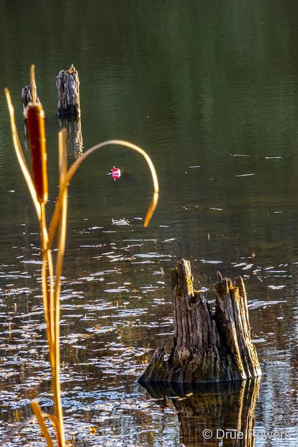 Hacklebarney Lake