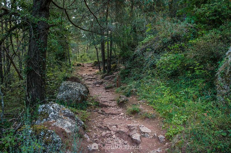 Camí Vell de l'Abellera a través del bosque