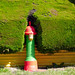 FALKLAND ISLANDS - 71 Fire hydrant, Stanley