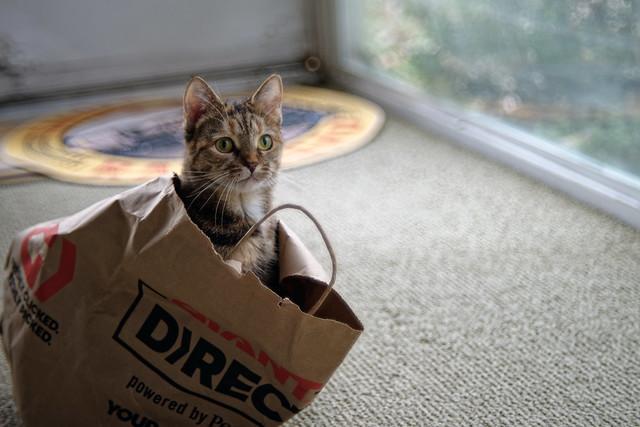 Bag of Cat