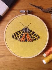 Grammia ornata moth embroidery