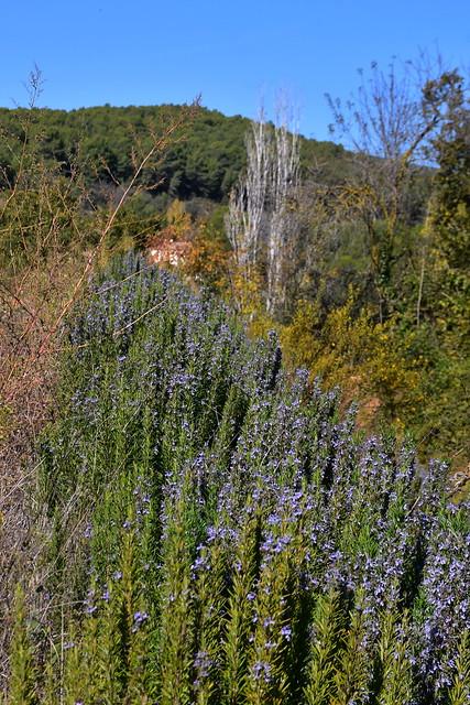 Abelles treballant al romaní, el Terme, Torrelles de Foix.