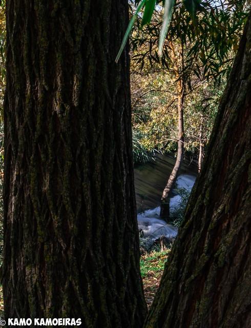 entre troncos, isla de soto