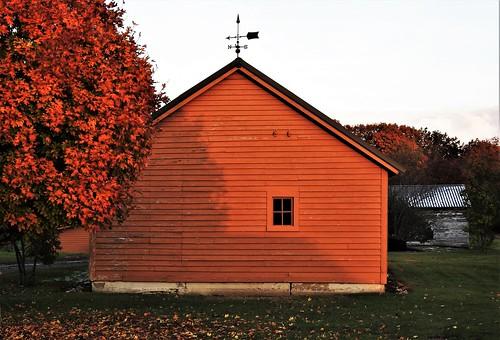 sunset orange barn newenglandfarm janelazarz p900 nikon shadows tree fall october autumn
