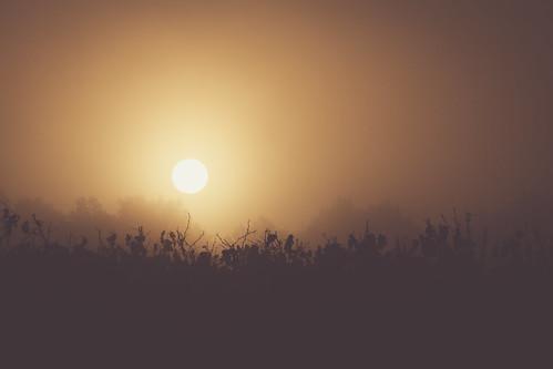 Tout en douceur, dans la brume.