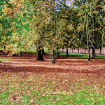Golden leaves at Ashton Park in Preston