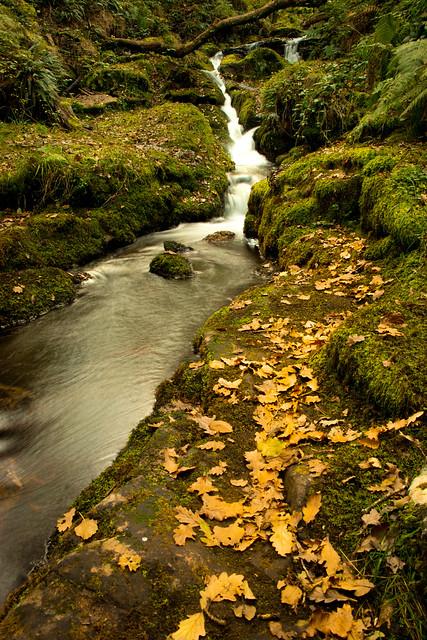 Autumn Stream - 'Explored'