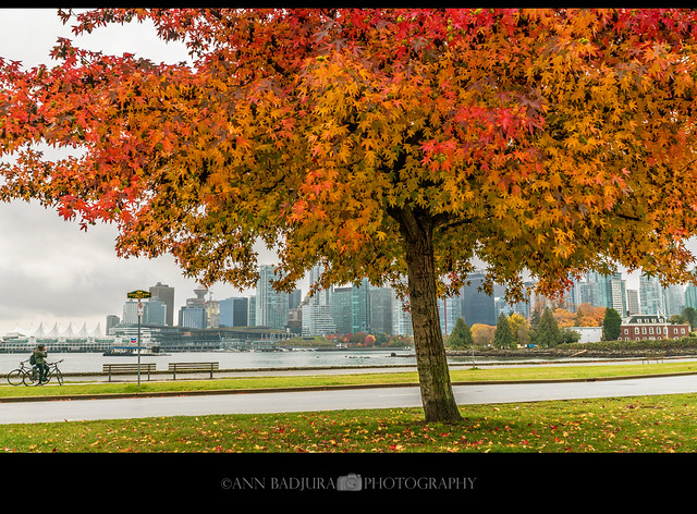 Stanley Park fall colours in Vancouver, BC, Canada