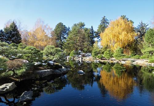 denverbotanicgardens colorado denver botanic garden japanese pond reflection trees autumn fall color gardens tree snow rocks shadows landscape