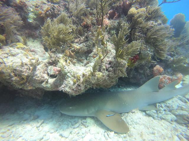Dive Report 1 NOV AM