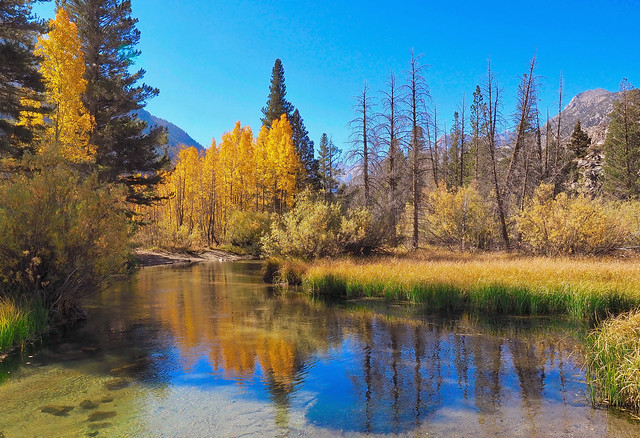 Sierra Nevada gold