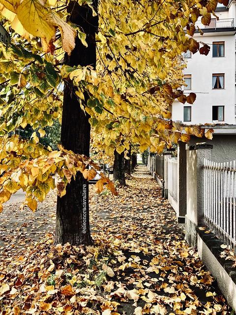Autumn. 🍁
