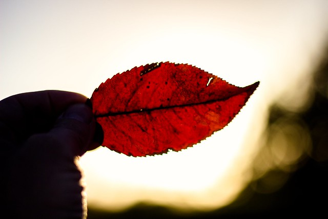 red leaf     or      red lips I want to kiss