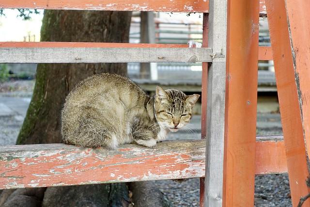 Today's Cat@2020ー10ー31